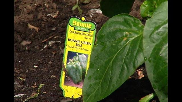 Plant Sale Scheduled for May 3 at Lewisburg Community Garden