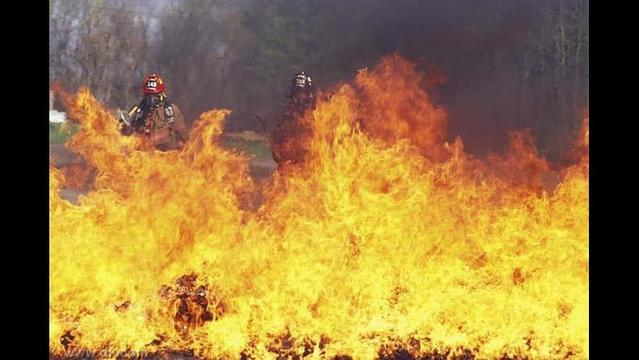 Report predicts grim days ahead for forests as climate change increases wildfires and drought