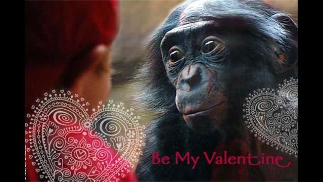 Bonobos: lovable and endangered