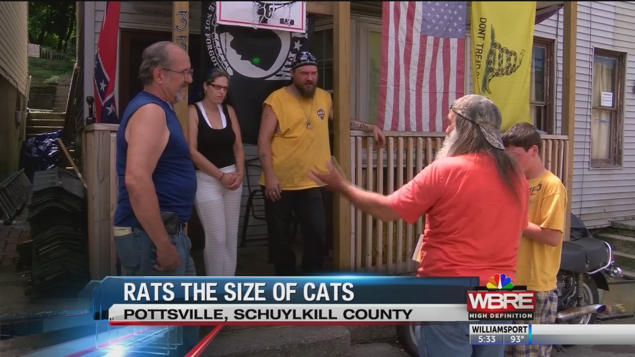 Residents complain of rats the size of cats